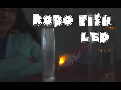 Robo Fish LED Review- Light Up Fish | RainyDayDreamers in 4k CC