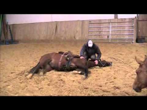 couché d'un cheval délicat par  j marie clair, ethologue.mpg