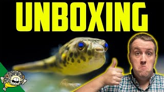 THEY FINALLY CAME! 5 Schoutedeni Puffers! New Fish Unboxing