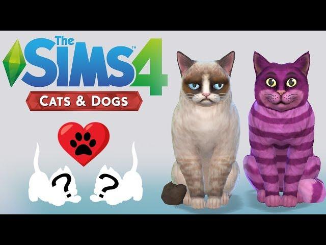Grumpy Cat and Cheshire Cat KITTENS!! |