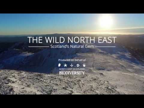 The Wild North East: Scotland's Natural Gem