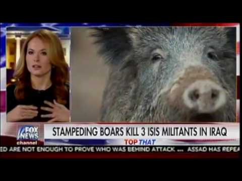 Feel Good Story: Wild Boars join fight against ISIS