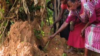 poor kumi residents survive by eating termites as food shortage grows worse