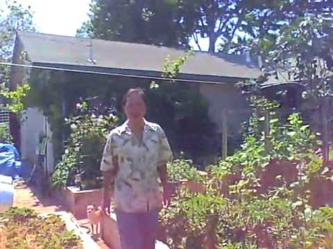 caught in the act ----an illegal organic  garden update