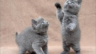 Смешные приколы про кошек. Видеоролик.