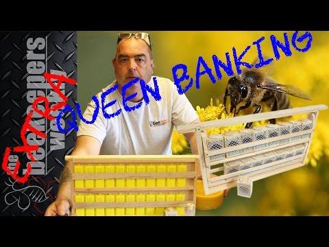 Honeybee Queen Banking Made Simple Queen Rearing Series Week 2