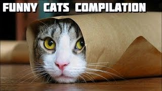 Funny Cats Compilation 4 - The Most Entertaining Cats
