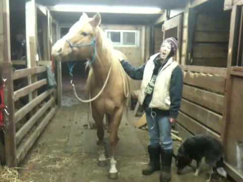3 Simple Tricks to Teach Your Horse | PetHelpful