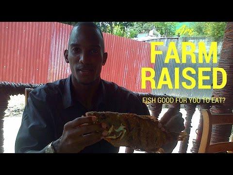 Farm Raised Fish: Is Eating Farm Raised Catfish, Salmon & Tilapia Healthy?