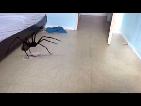 Fausse araign e qui fait peur youtube for Miroir qui fait peur