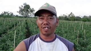 Toto and his Atsal Farm in Polomolok, South Cotabato  Mindanao