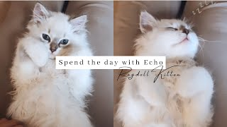 A Day In The Life Of Echo   Ragdoll Kitten Sleeping And Playing  SO CUTE!!!!