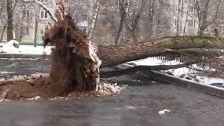 видео Деревья, крыши, машины, провода