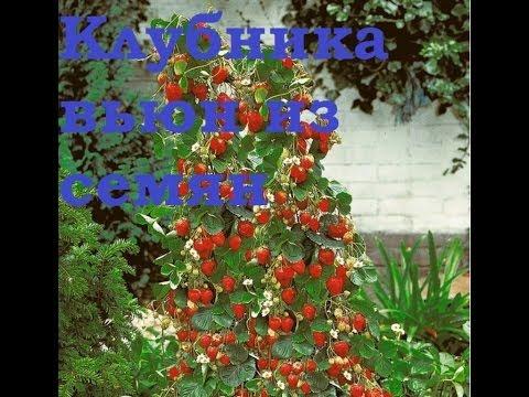 Плетущиеся и вьющиеся растения для забора: чем оформить