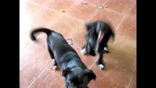 Dos perros ridículos