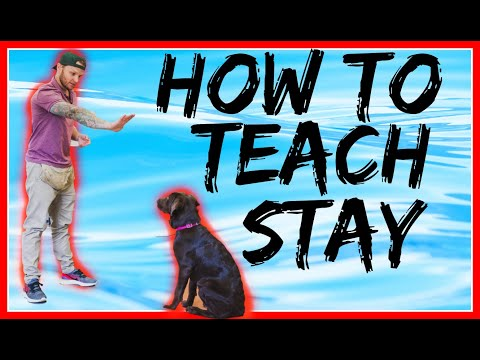 How to teach your dog the stay command- how to teach my puppy to sit and stay