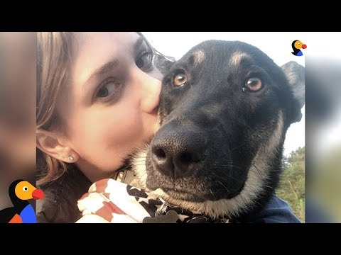 Girl Adopts Street Dog While Traveling In India - DELHI | The Dodo