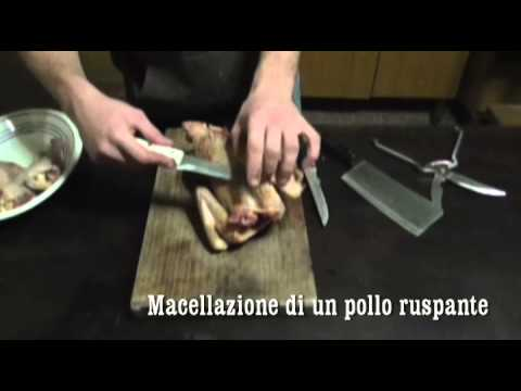 Macellazione di un pollo ruspante YouTube