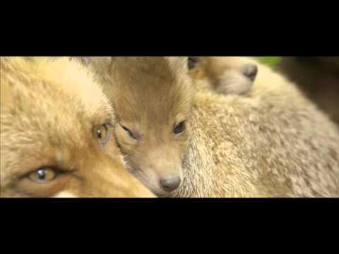 <ピスタチオ>、動物に学ぶお笑い界でのサバイバル術を披露!映画『シーズンズ 2万年の地球旅行』 イベントレポート