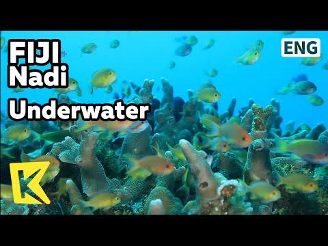 【K】Fiji Travel-Suva, Nadi[피지 여행-수바, 난디]피지 바닷속/Underwater/Seaside/Coast/View/Underwater Life/Coral