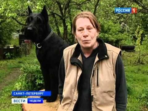 Догхантеры за людей и против зоошизы:  Https://forum.doghunter.site/