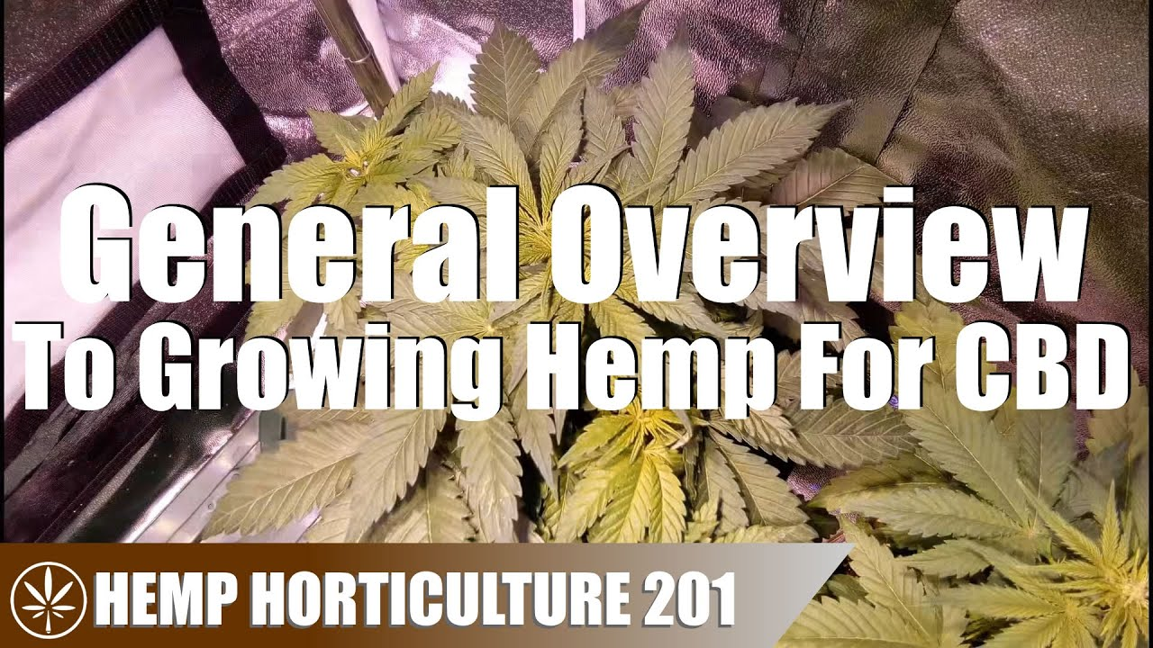 A General Overview Of How To Grow Hemp For CBD