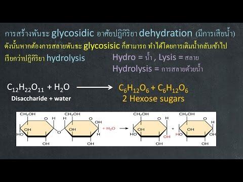 ชีววิทยา เคมีที่เป็นพื้นฐานของสิ่งมีชีวิต