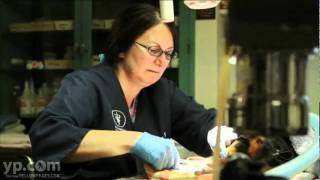 The Vet Clinic Columbus Oh Veterinary Surgery Pet Care