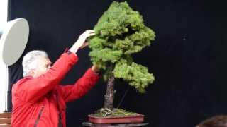 INTERNATIONAL BONSAI ACADEMY with Walter Pall 2013 - Case Study 8/ Picea and a little Carp