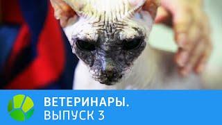 Ветеринары. Попугай, собачка, кошка, лиса | Живая Планета