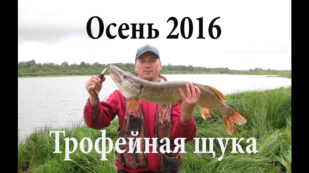 Рыбалка осень 2016 / Трофейная щука 4,7 кг на троллинг (Рыболовный .