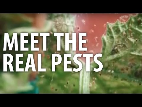 Meet The Real Pests - The Dirt Doctor