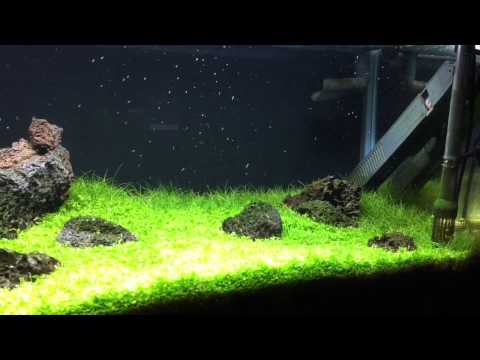 First Look At The 20 Gallon Long Iwagumi Style Tank