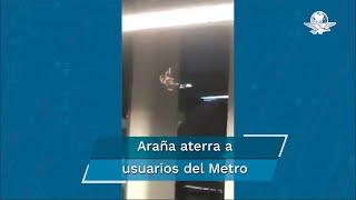 """Tras la aparición de un video en el que se muestra una supuesta araña """"gigante"""" en el andén del Metro, un aracnólogo explica qué especie es"""