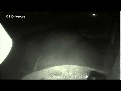 Q See Home Security Camera Night Vision Captures Bat Slow