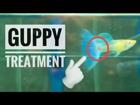 Guppy Red Spot Treatment