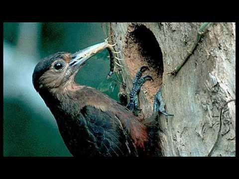 Woodpecker Song  by The Ray Charles Singers (1966 HD)