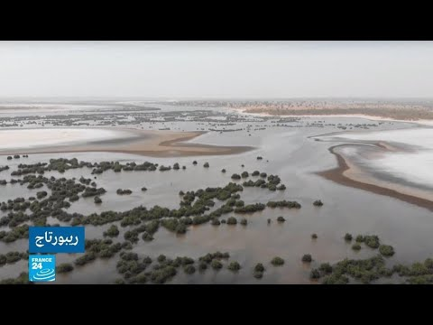 مياه دلتا سالوم -أمازون السنغال- مهددة بفعل الأملاح والجفاف!!  - نشر قبل 1 ساعة