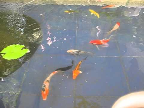 ปลาคราฟบ่อเราเอง