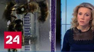 Таинственное исчезновение насекомых: европейские ученые бьют тревогу - Россия 24
