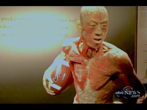 Shocking 'Bodies Exhibition' Documentary [Bodies Revealed]