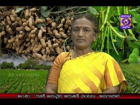 Rabhi ki Annuvyna AaruthadiPantalu Dr Y  PADMA LATHA