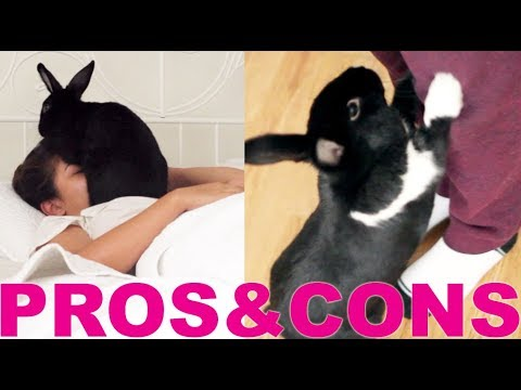 PROS & CONS OF HAVING A RABBIT!