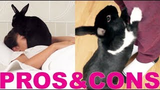 PROS & CONS OF HAVING A RABBIT! thumbnail