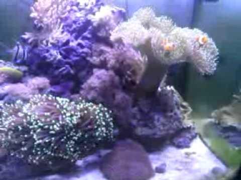 Aquarium eau de mer osaka 155 140l youtube for Achat aquarium eau de mer
