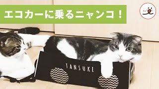 via Instagram@tansuke0323 https://www.instagram.com/tansuke0323/ □...