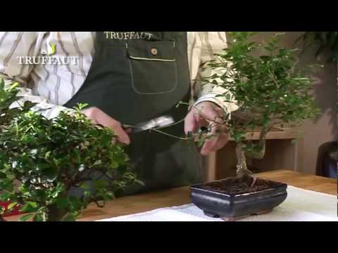 tailler un bonsa les explications jardinerie truffaut tv youtube