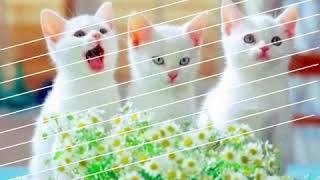 10 фото милых котят 😺😸