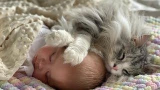 When Milo Met Mia   Cat Does Everything With Baby As They Grow Up (So Cute!!)