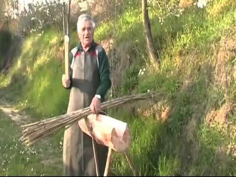 La coltivazione e la lavorazione della canapa (parte 1)